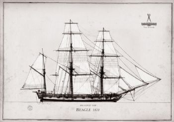 1831 HM Survey Ship Beagle pen ink study